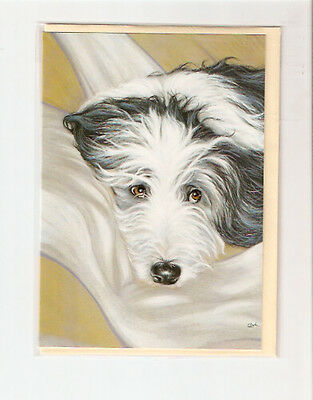 Bearded Collie Beardie Notecards Note Cards Paul Doyle Pack 5 I Don't Think So
