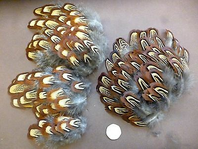 100 + Pheasant shoulder neck feathers fly tying materials crafts