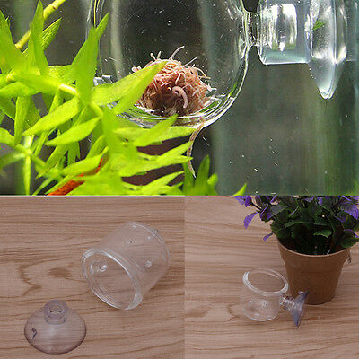 New Pinhole Glass Pot Plant Cup Holder Shrimp Aquarium Fish Tank Aquatic Feeder