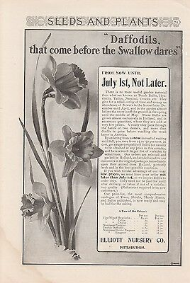 1904 Elliott Nursery Co Pittsburgh PA Ad Daffodils Come Before the Swallow Dares