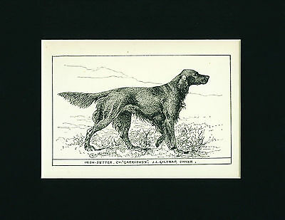 Dog Art Print 1900 Irish Setter Dog ANTIQUE
