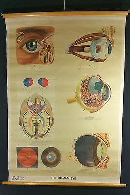 Vintage 1950's EYE Anatomical Medical Adam Rouilly Pull Down Chart Poster Large