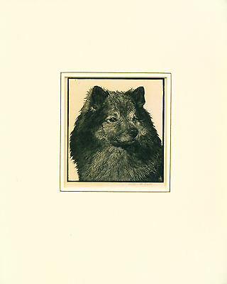 Antique Etching Print 1930's Named Keeshond Dog SIGNED Scarce by Helen R. Lock