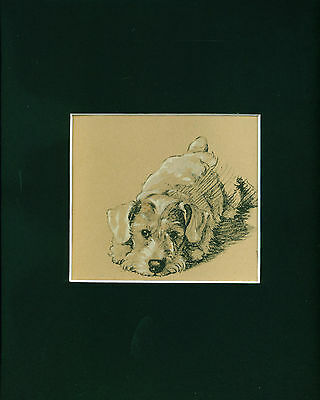 Dog Print 1934 Sealyham Terrier by CECIL ALDIN Vintage