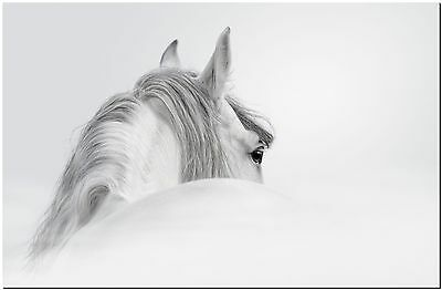 White Horse Abstract Snow High Quality Canvas Print Poster 36X24""