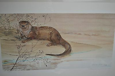 "Thomas Quinn Print ""River Otter With Wild Rose"" Signed and Numbered by Artist"