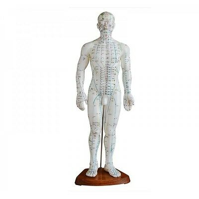 Acupuncture Model 50cm Male with Wooden Base