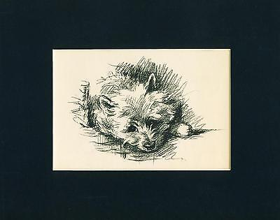 Dog Print 1937 bored Cairn Terrier Dog by Lucy Dawson VINTAGE
