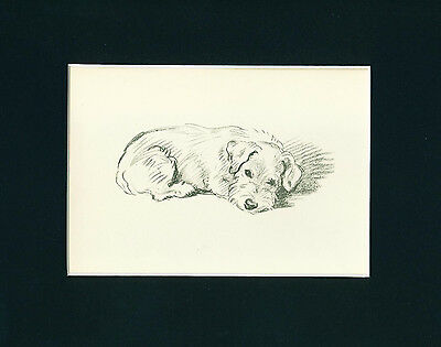 Dog Print 1937 bored Sealyham Terrier by Lucy Dawson VINTAGE