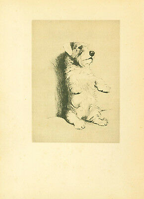 Dog Print 1932 Sealyham Terrier by CECIL ALDIN Vintage