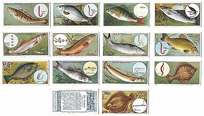 Wills - Fish & Bait - 14/50 - 1910 - Good To Very Good Condition