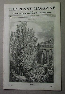 1834 paper: AMSTERDAM; Bay Tree; ARAUCANIAN Indians of Chile; gooseberry