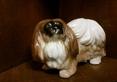Pekingese China dog