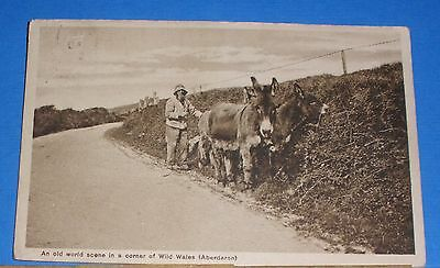 Aberdaron Postcard. A man and 3 donkeys on the Aberdaron road.