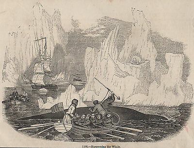 Genuine C1845 Print Whale Hunting Harpoon Whaling Fishery Oil Arctic Ocean Sea A