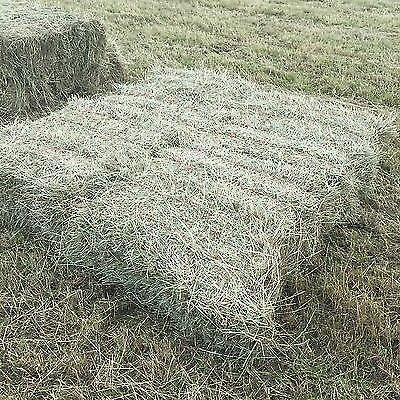 2016 Good Quality Small Bale Hay