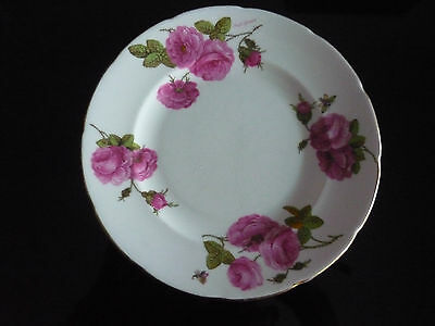 Vintage  Foley Side Plate Century Rose Produced In1950 In Very Good Condition