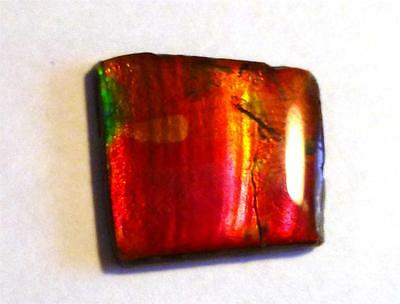 13 carats! Color Change Red to Green AMMOLITE Freeform Finished Gemstone 22x20mm