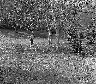 1910s BOY SHAKING TREE Antique Photographic Glass Negative (Woodland Forest)