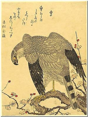 Kitagawa Utamaro Hawk and Shrike Vintage Japan- Canvas Print Poster 18X12""