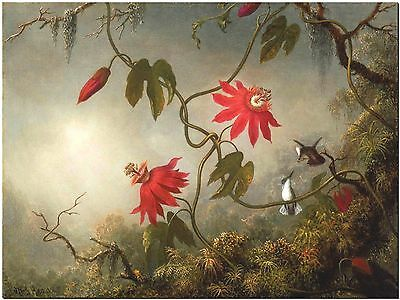 Martin Heade Passion Flowers Hummingbird #3- Canvas Print Poster 18X12""