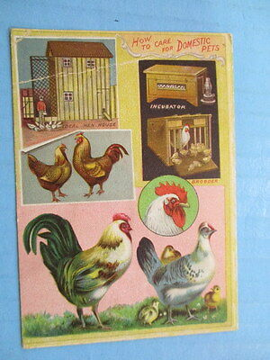"""Antique Trade Card,""""how To Care For Domestic Animals"""", Poultry, Lion Coffee"""