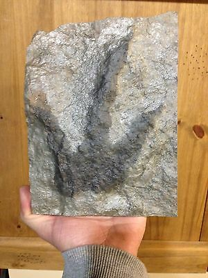 Dinosaur Footprint 7 Inches, Super Silver Color!
