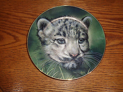 Snow Leopard Cub - Big Cats Collectible Plate - Princeton Gallery - LE