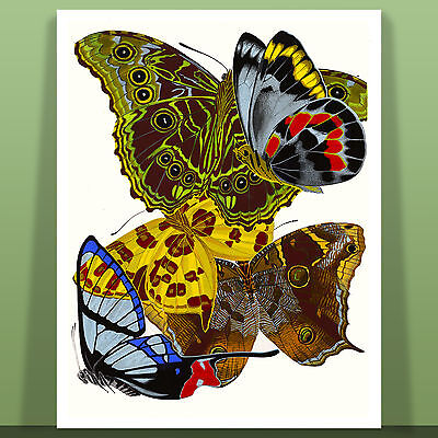 """Stunning Butterfly Art by Eugene Seguy Papillons Canvas Print 12X16"""" #12"""