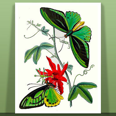 """Stunning Butterfly Art by Eugene Seguy Papillons Canvas Print 12X16"""" #16"""