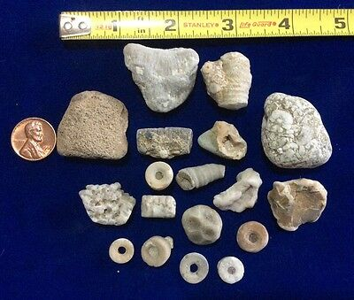 Lk Michigan Fossils- Crinoids- Horn Coral-Septarian Stone- Geodes- Charlevoix