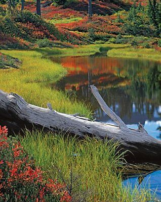 Springbok 1500 piece puzzle CALMING REFLECTIONS New Sealed In Box
