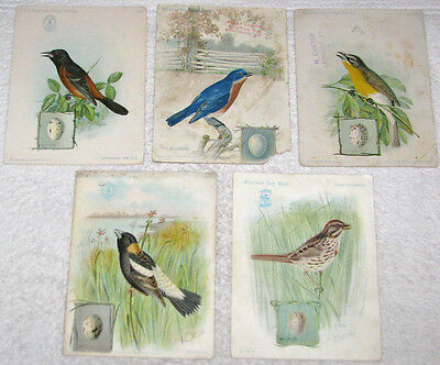 Lot of 5 Singer Sewing Machine Victorian Trade Cards Birds