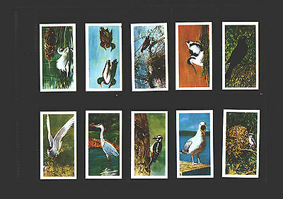 tea cards brooke bond british birds by francis pitt white back 1954 complete set