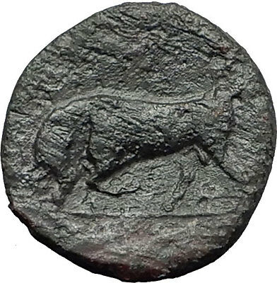 SYRACUSE in SICILY - HIERON II 275BC RARE R1 Bull Ancient Greek Coin i58784