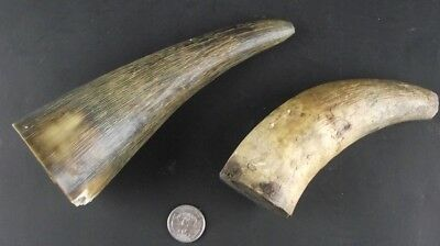 2 Antique Powder Horns 1 With Cork  1 As Is