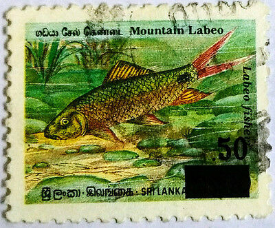 110.sri Lanka  Used Stamp Labeo Fish Surcharged