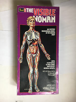 Visible Woman Revell model