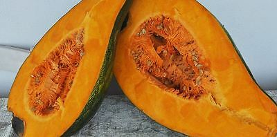 PUMPKIN Trombone Gramma 10 seeds ORGANIC HEIRLOOM vegetable garden UNUSUAL RARE