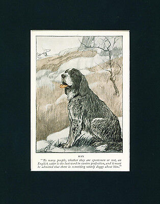 Dog Print 1926 English Setter by Charles Livingston Bull ANTIQUE