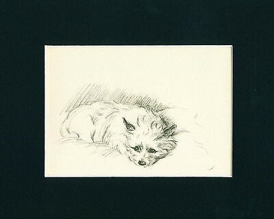 VINTAGE Dog Print 1946 Cairn Terrier Dog by Lucy Dawson resting