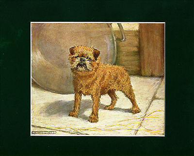 Dog Print 1907 Brussels Griffon Dog by Vernon Stokes ANTIQUE