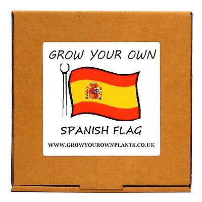 Grow Your Own Spanish Flag Plant Kit - Birthday or Christmas Gardening Gift