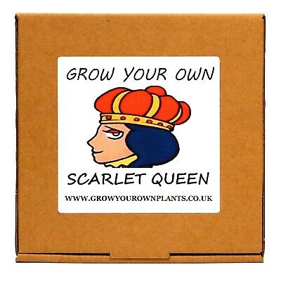 Grow Your Own Scarlet Queen Plant Kit - Birthday or Christmas Gardening Gift