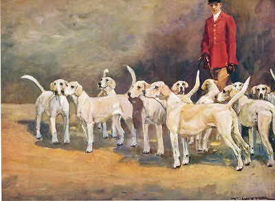 Rare 1934 Print Fox Hunting - The Curre White Hounds - by T.Ivester LLoyd