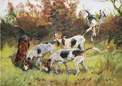 Rare 1934 Print Fox Hunting - Old Southern Hounds - by T.Ivester LLoyd