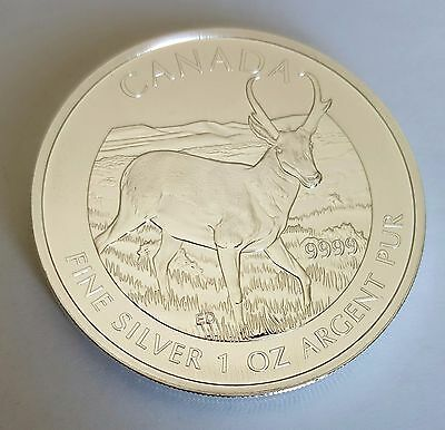 Pronghorn Antelope Canadian 2013 1 oz .9999 Pure Silver Coin, New