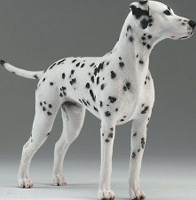 Dalmatian Standing - Country Artists #02002