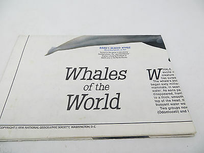 National Geographic Map - Whales of the World - December 1976