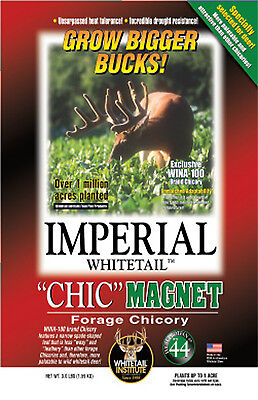 1 lb CHIC MAGNET SEEDS 1/3 acre Whitetail Institute CHICORY Deer  Plot Seed